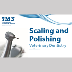 Vet Dentistry for Vet Nurses - 3 - Scaling and Polishing